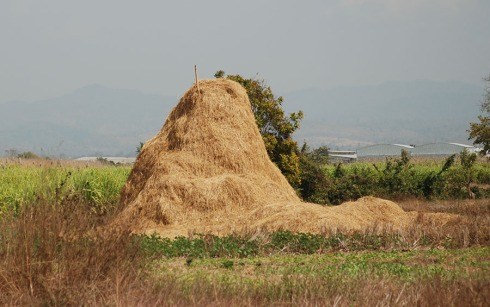 Haystack by Claire Rosslyn Wilson