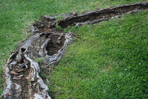 Exposed Roots by Claire Rosslyn Wilson