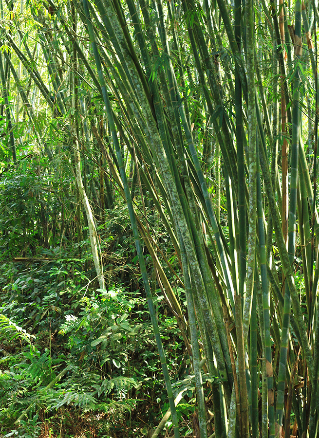 Bamboo shoots by Claire Rosslyn Wilson