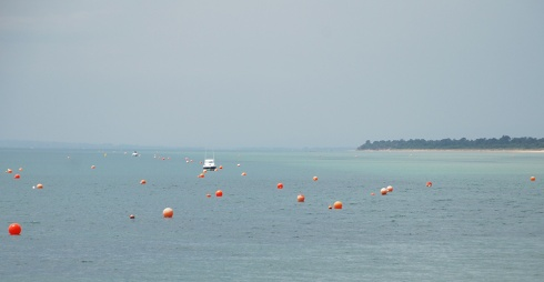 Boats and buoys by Claire Rosslyn Wilson