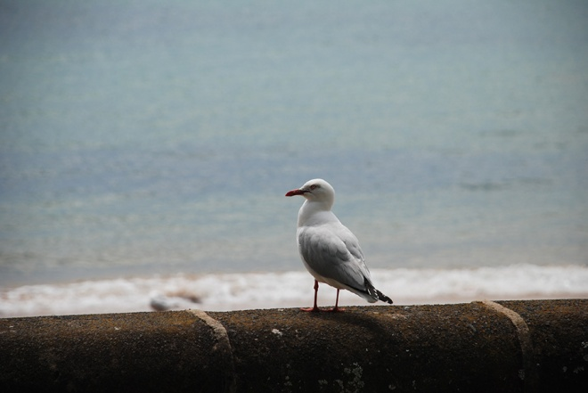One seagull by Claire Rosslyn Wilson