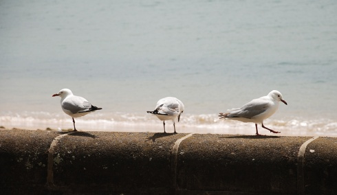 Seagulls by Claire Rosslyn Wilson