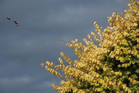 Golden elm by Claire Rosslyn Wilson