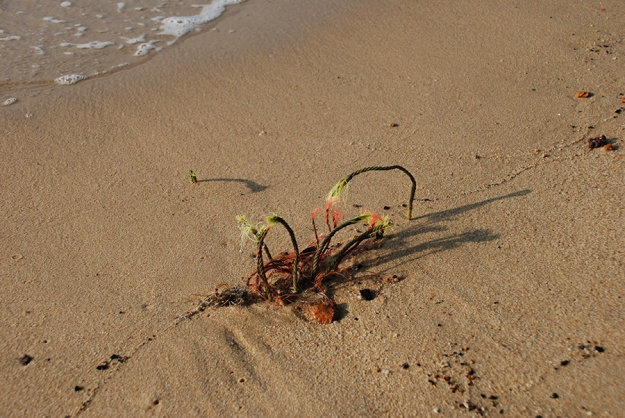 Sand rubbish by Claire Rosslyn Wilson