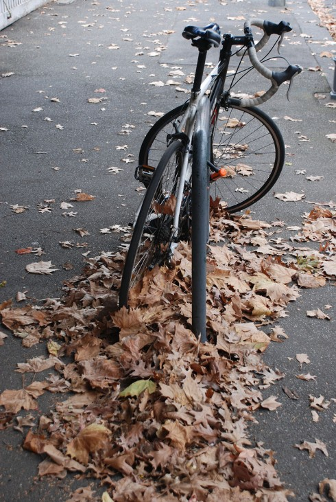 Autumn Bike by Claire Rosslyn Wilson