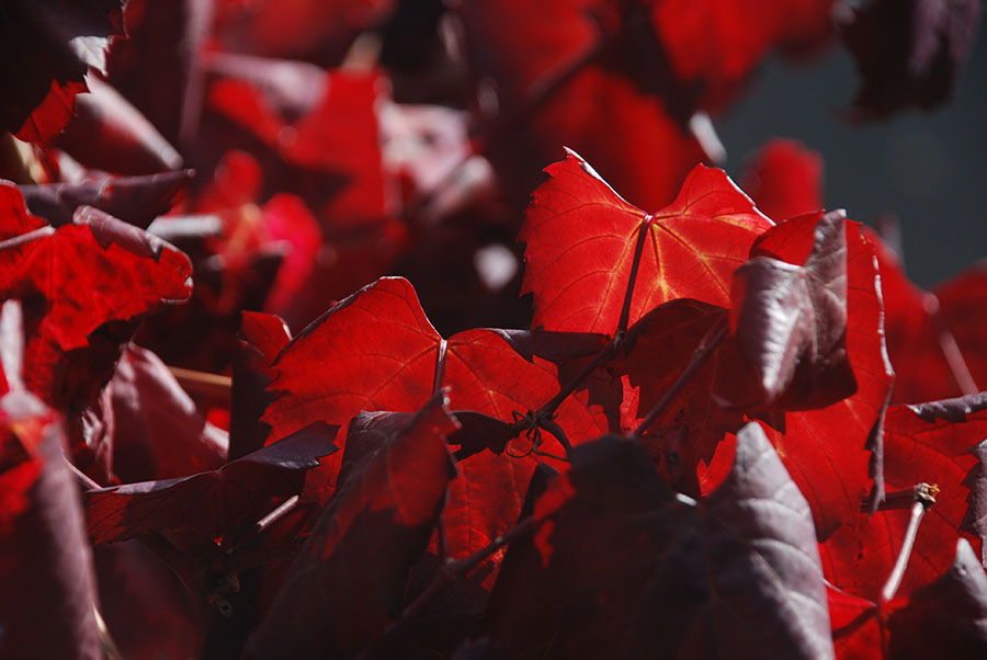 Red veins by Claire Rosslyn Wilson