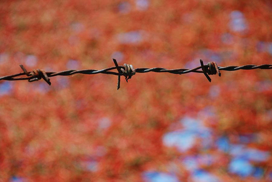 Barbed wire by Claire Rosslyn Wilson