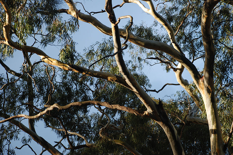 Lit branches by Claire Rosslyn Wilson