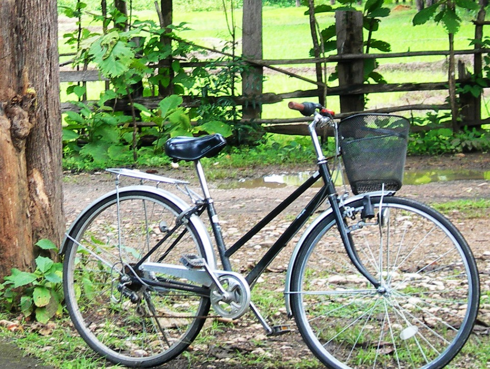 Bikes life by Claire Rosslyn Wilson