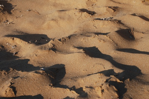 Sand dunes by Claire Rosslyn Wilson