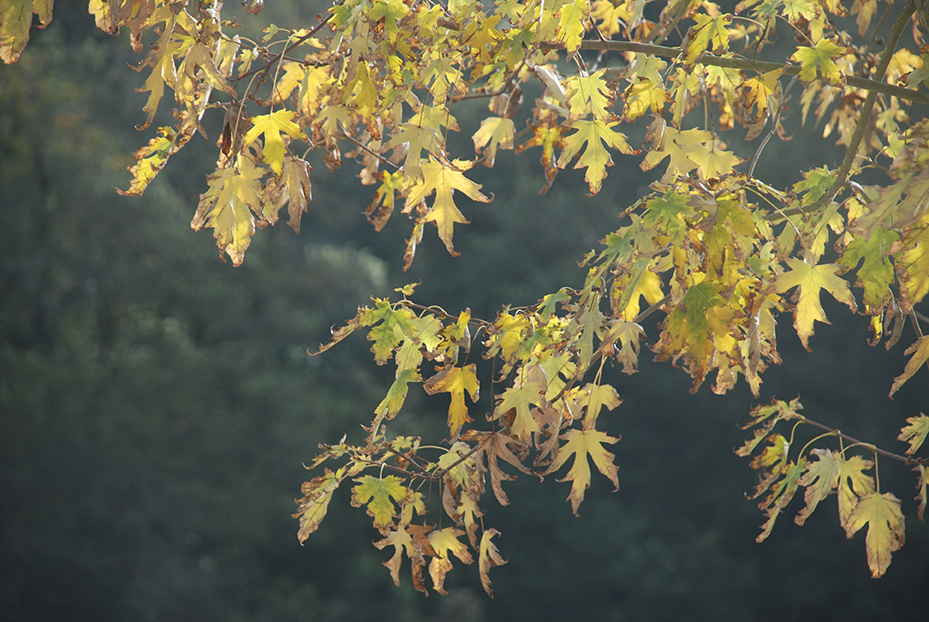 trees-and-leaves