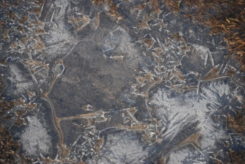 Ice by Claire Rosslyn Wilson