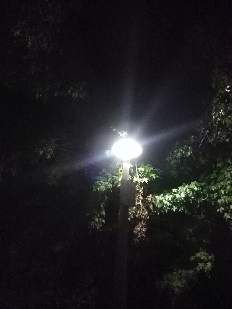 Light posts by Claire Rosslyn Wilson