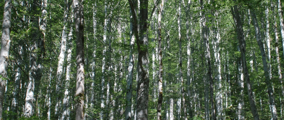 Dappled by Claire Rosslyn Wilson