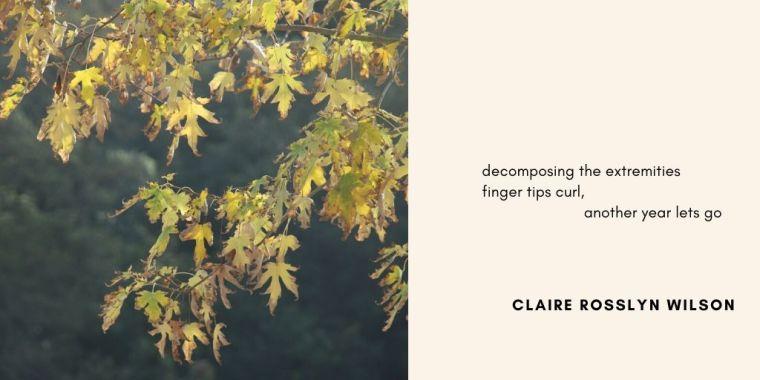 Residence haiku-autumn-Claire Rosslyn Wilson