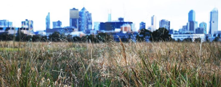 Residence haiku-Melbourne seeds-Claire Rosslyn Wilson