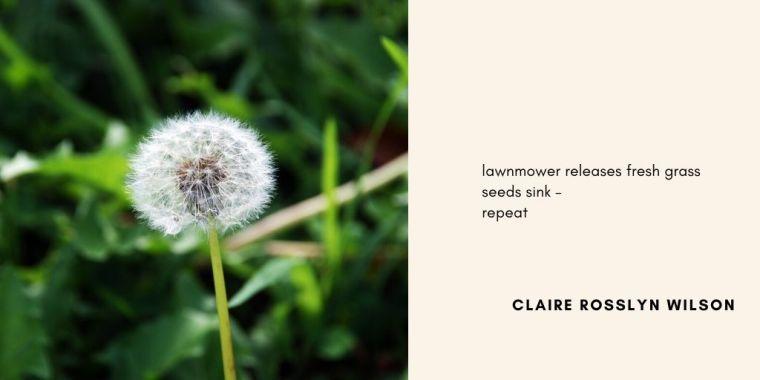 Residence haiku-seeds-ClaireRosslynWilson